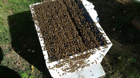 Beekeeping Class Newcastle - Hands On