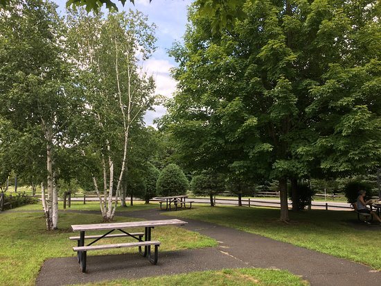 Guilford Welcome Center: Beautiful birch trees grace the picnic area. Choose a table in sum or shade...watch your kids on