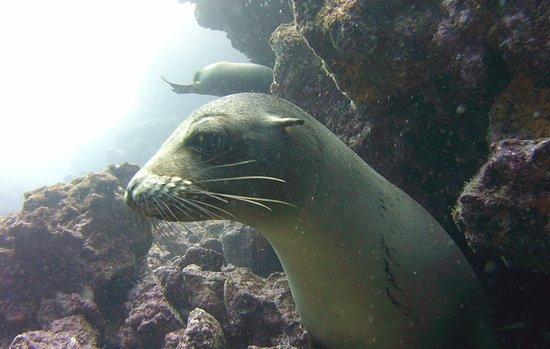 Academy Bay Dive Center照片