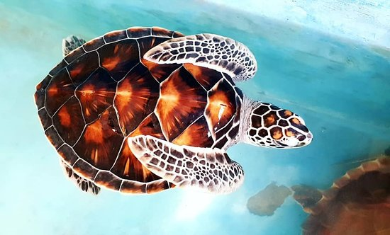 Sea Turtle Farm