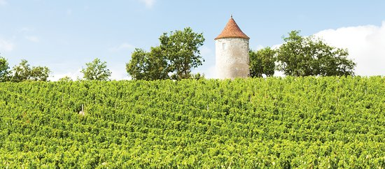 Dordogne Vineyard Tours