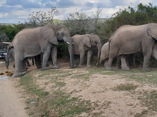 Shamwari Game Reserve, แอฟริกาใต้: 20180802_151117_large.jpg