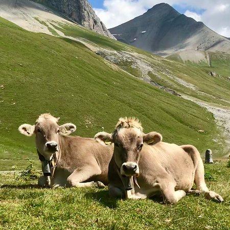 La Punt-Chamues-ch, Ελβετία: photo2.jpg