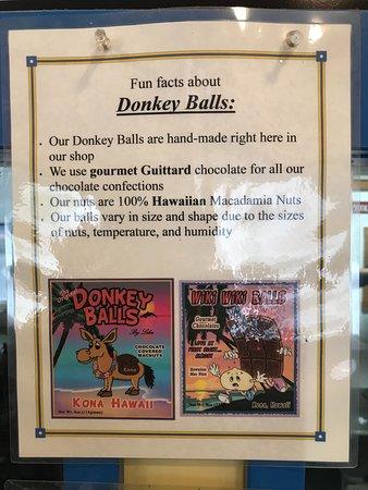 The Original Donkey Ball Store: Fun Facts