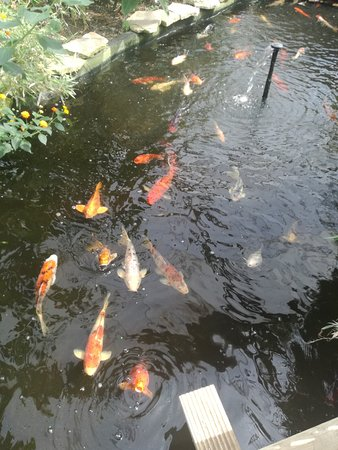 Studley Grange Garden and Leisure Park : Fish