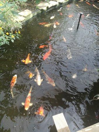 Studley Grange Garden and Leisure Park: Fish