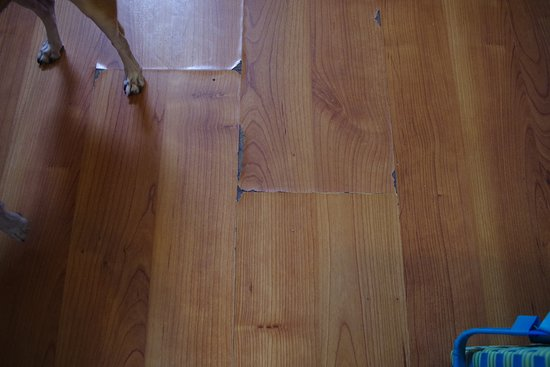 Motel 6 Grand Junction: Worn laminate floor