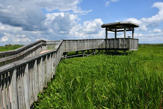 Horicon National Wildlife Refuge: Along the floating boardwalk is a covered observation deck in the very heart of the marsh.