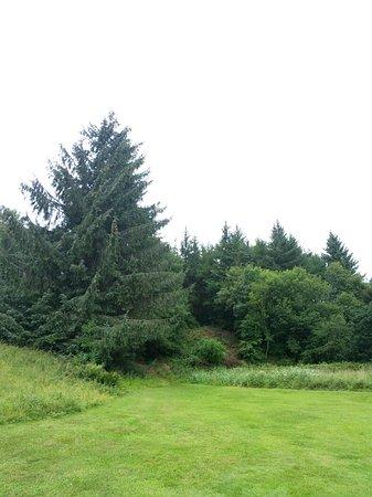 Giffnock, UK: 20180802_133926_large.jpg