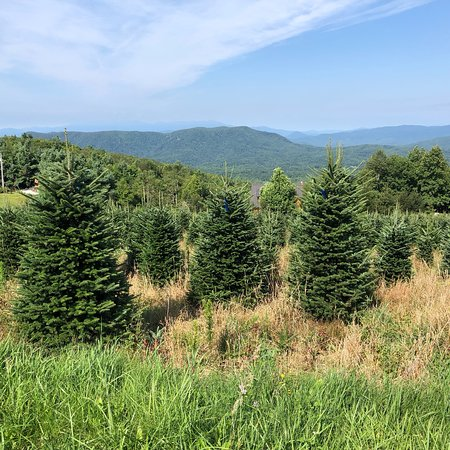 Jonas Ridge, Carolina del Norte: photo0.jpg