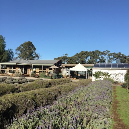Wandin North, Australia: lavender farm