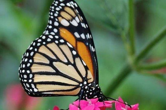 Insektmuseum og sommerfuglhage fra...