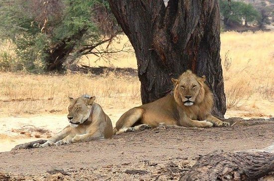 3 DAYS BEST OF SELOUS GAME RESERVE...