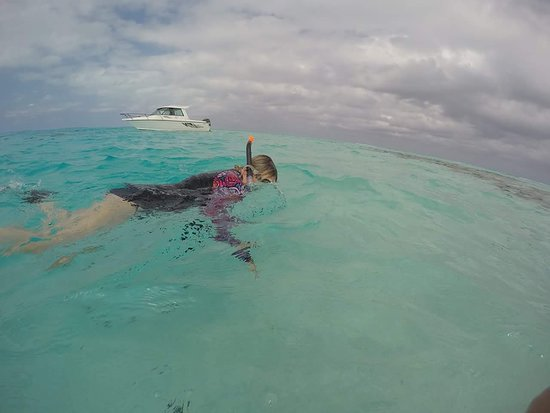 Black Pearl Charters: Best ever snorkelling