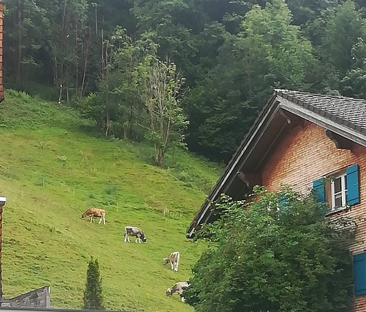 Schoppernau, Austria: IMG_20180802_084303_large.jpg
