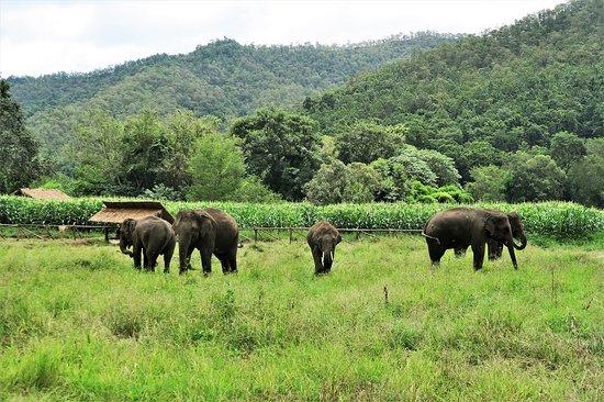 Chiangmai Elephant Home