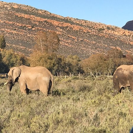 Touwsrivier, South Africa: photo4.jpg