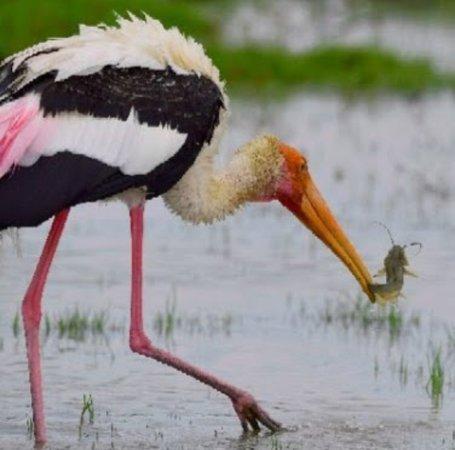 Kalamatiya Bird Sanctuary