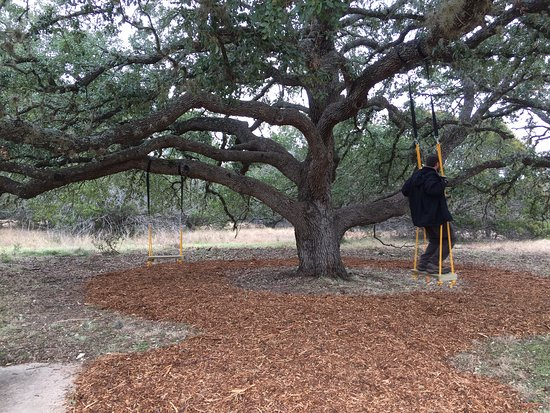Tree Swings Located Near The Nature Center And Pollinator