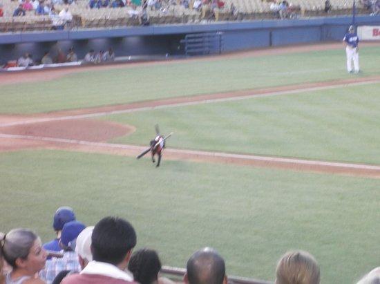Cashman Center: Cashman Field...Ball Dog doing his thing...