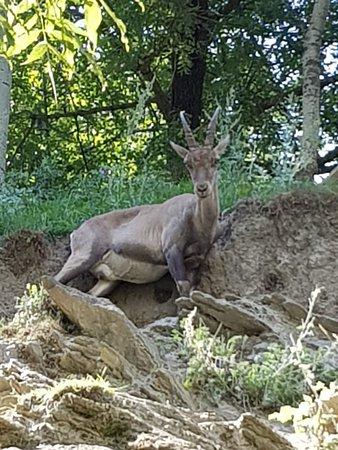 Parc Animalier d'Introd Fotografie