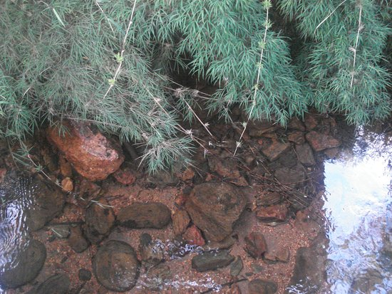 Caparao National Park, ES: Tranparência da água e Bambu endêmico