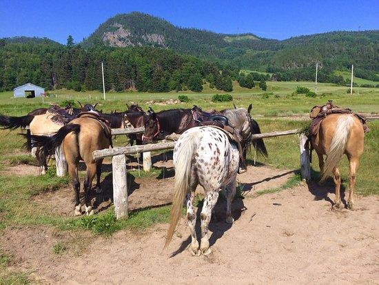 Centre Equestre des Plateaux