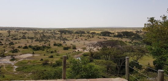 Eagle View, Mara Naboisho: 20180723_141825_large.jpg