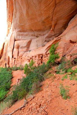 Navajo National Monument: Spectacular Betatakin