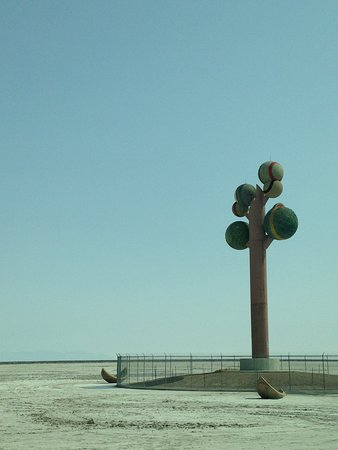 Metaphor - Tree of Utah: Standing tall alone, fenced in though with nowhere to stop