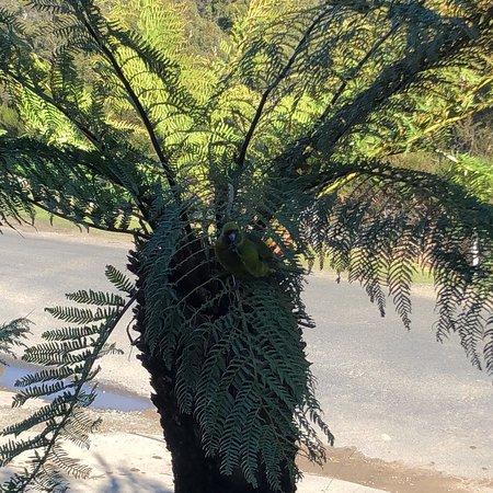 Fern Tree, Avustralya: photo6.jpg