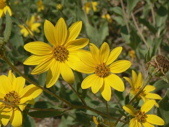 Flagstaff Mountain: Wildflowers along Ute Trail