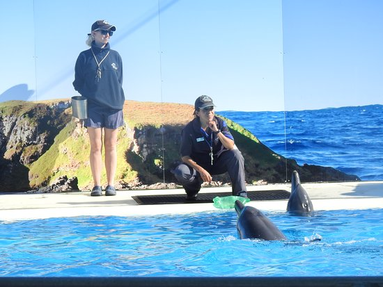 Pet Porpoise Pool - Dolphin Marine Magic Photo