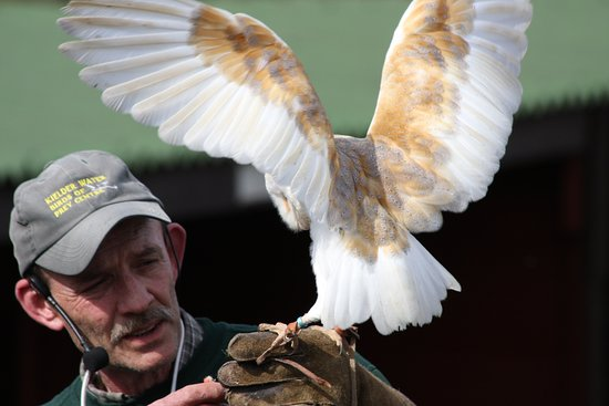 Kielder, UK: Ray with a beautiful Barn Owl