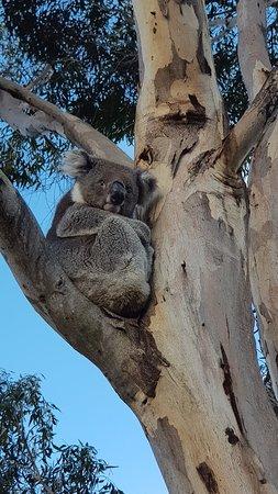 Kingscote, Australia: 20180803_140350_large.jpg