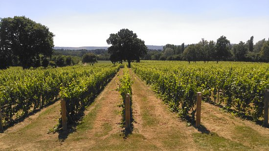 Nutbourne Vineyard