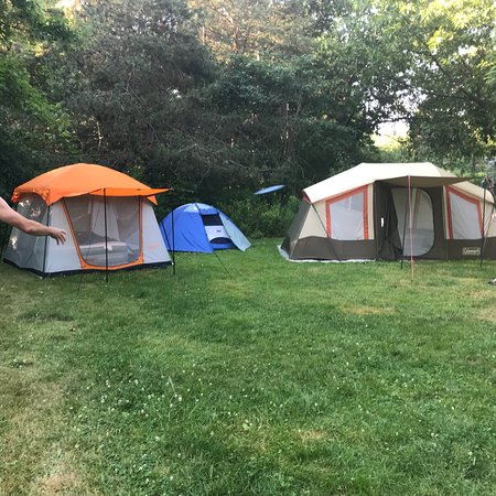 Bluff Point, Estado de Nueva York: Twin pines loop has a greasy tree canopy and is our favorite area to tent camp.