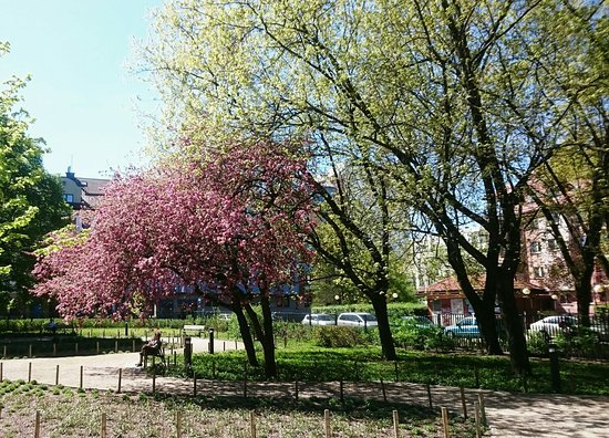 Park im. Józefa Polińskiego