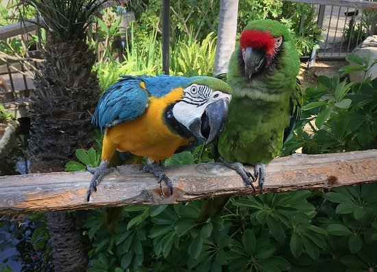The sounds of the Jungle    the McCaws! - Picture of