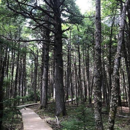 Kejimkujik National Park, Canada: photo2.jpg