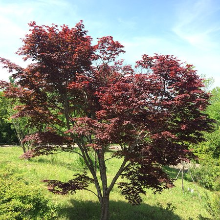 (北川村, 日本)北川村 莫內的花園 - 旅遊景點評論 - TripAdvisor