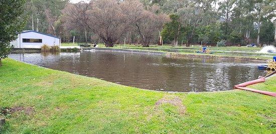 Buxton, Australia: 20180729_163008_large.jpg