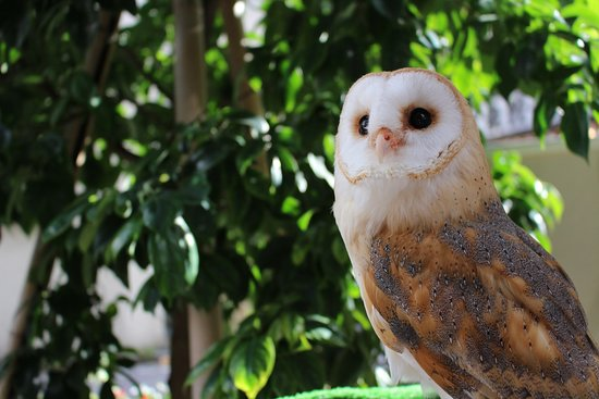 Owl Cafe & Bar Owl Village Kichijoji