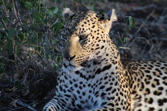 Ngala Private Game Reserve, Sudáfrica: One of the many beautiful animals we saw