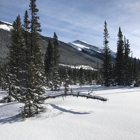 Snowy Owl Sled Dog Tours صورة فوتوغرافية