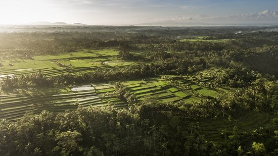 COMO Shambhala Estate, Bali: Other