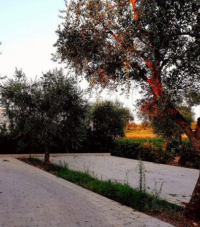 Cerfignano, Италия: Parcheggio Gratuito tra gli Olivi