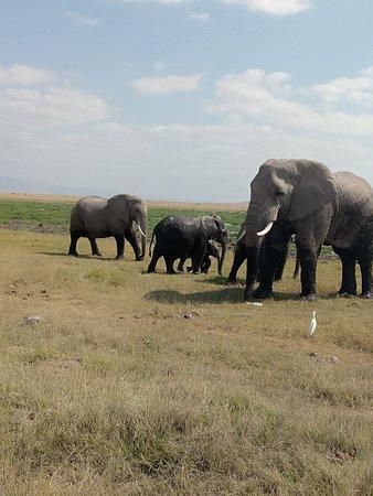 Kenya tour budget safari tourism amboseli tour - Picture of Kenya