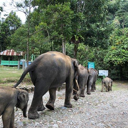 Gunung Leuser National Park, Ινδονησία: photo4.jpg