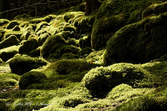 Entre ombre et lumière - Photo de Jardin de Berchigranges, Gérardmer ...